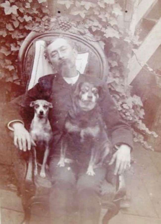Dead man in a chair with his dogs.