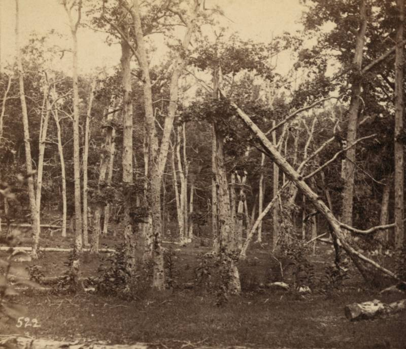 The damaged surrounding forest in the immediate aftermath of the Battle of Gettysburg.