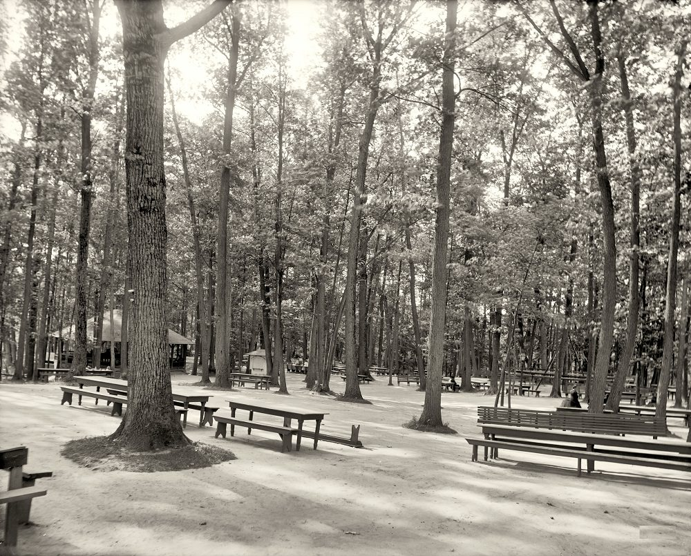 Picnic grounds, Long Branch Park, Syracuse, 1905