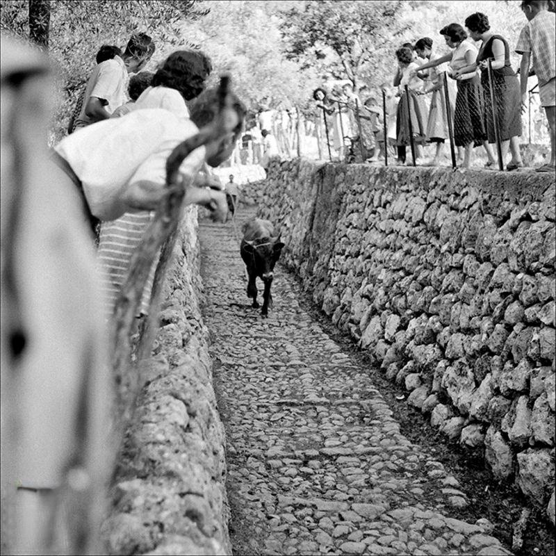 People watching the descent of the Fornalutx bull, 1957