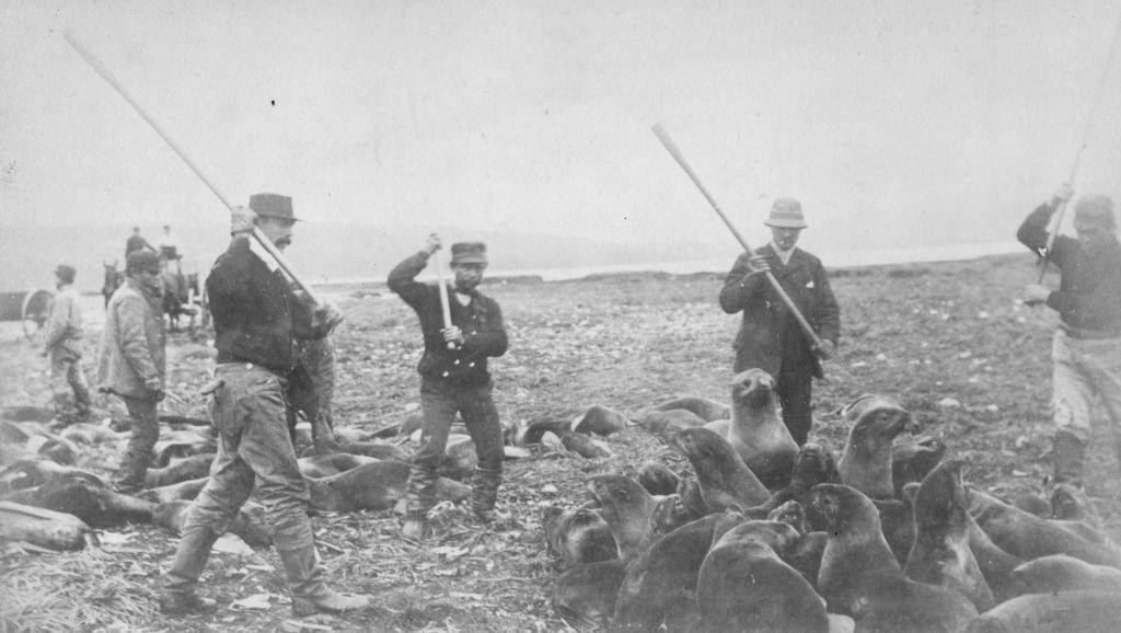 Inuits clubbing seals to death at the killing ground on St Paul Island in Alaska, 1880s.