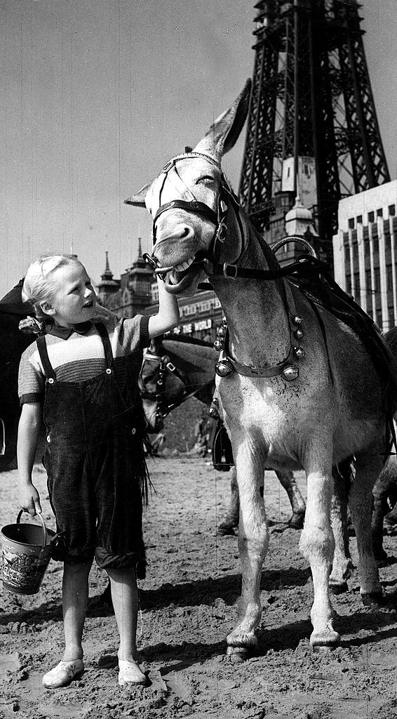A Girl wearing dungarees with a bucket holds on to protesting donkey on Blackpool beach, 1952.
