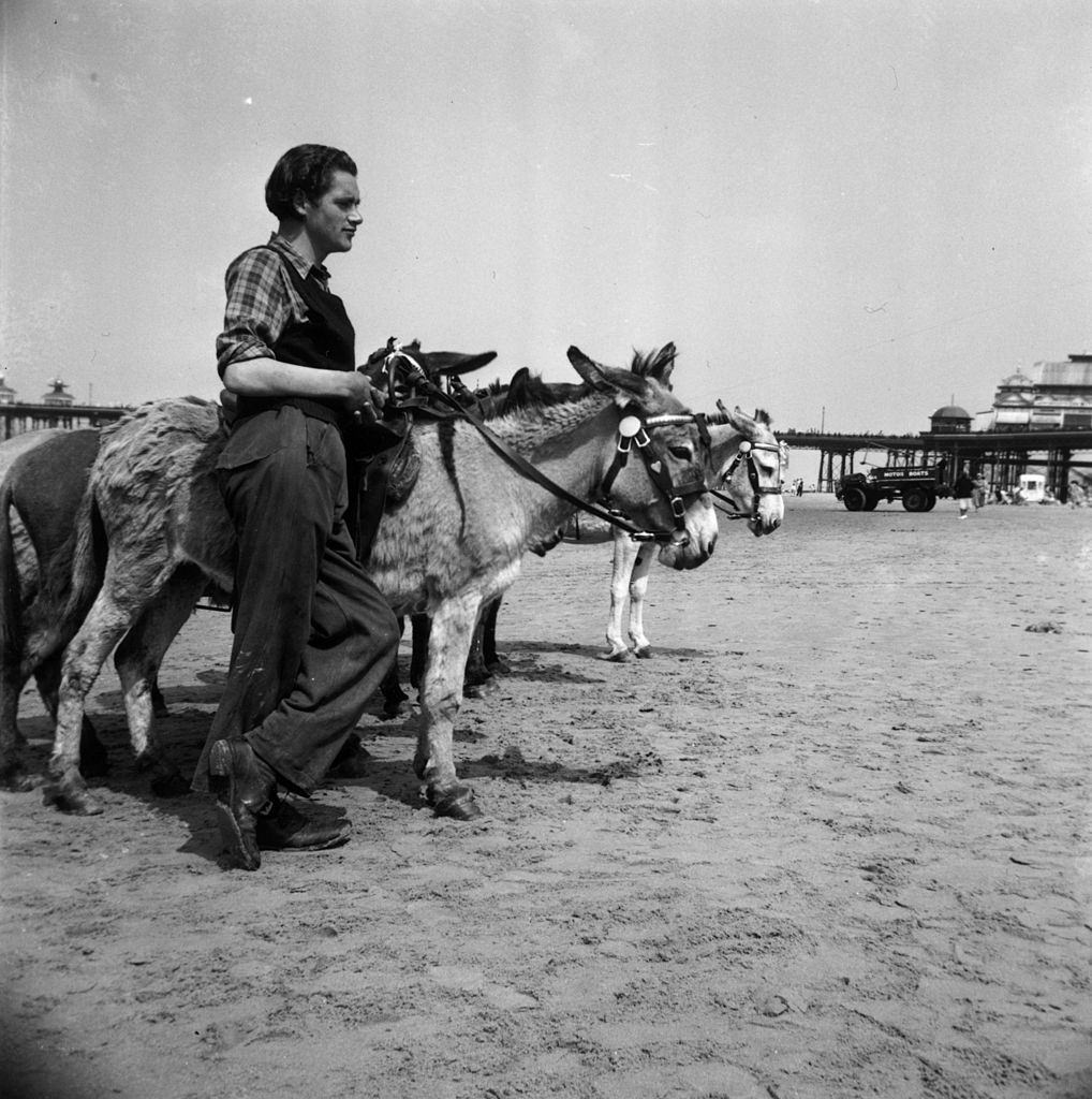 A man waiting for customers by a donkey ride on the beach at Blackpool, 1951.