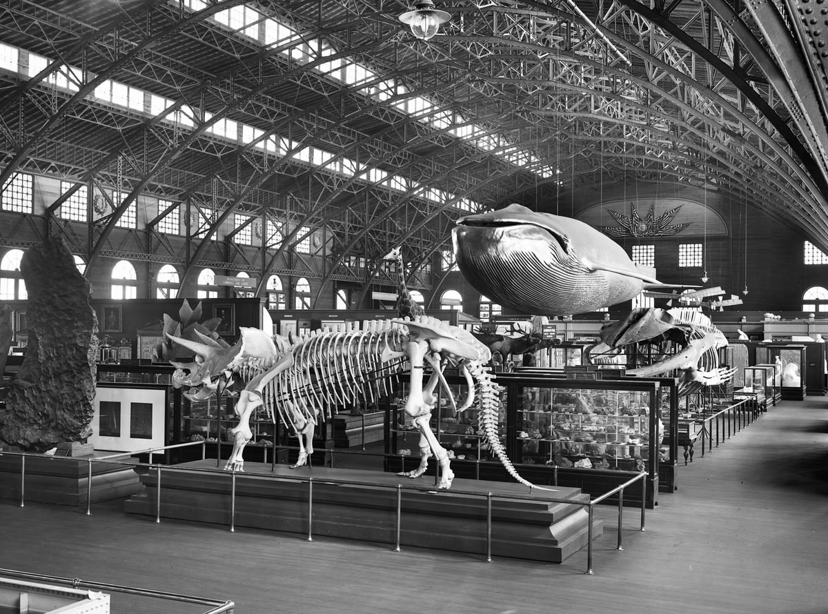 A view of the natural-history fossil exhibit, with a model of a whale and skeletons of several dinosaurs, at the Louisiana Purchase Exposition in St. Louis, Missouri, in 1904.