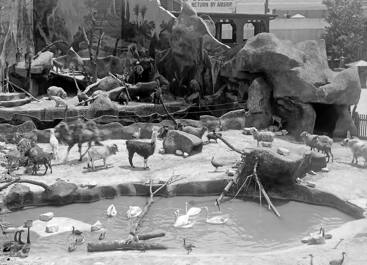 Creatures walk around in enclosures at Hagenbeck's animal show on the Pike.