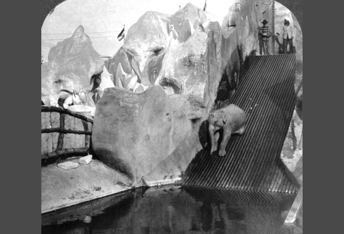 """Hagenbeck's trained elephant """"shooting the chutes"""" at the World's Fair in St. Louis, Missouri."""
