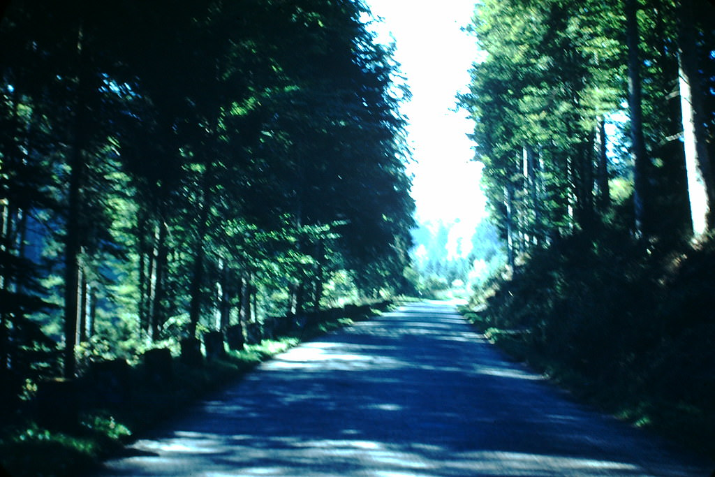 Black Forest Road, Germany, 1949.