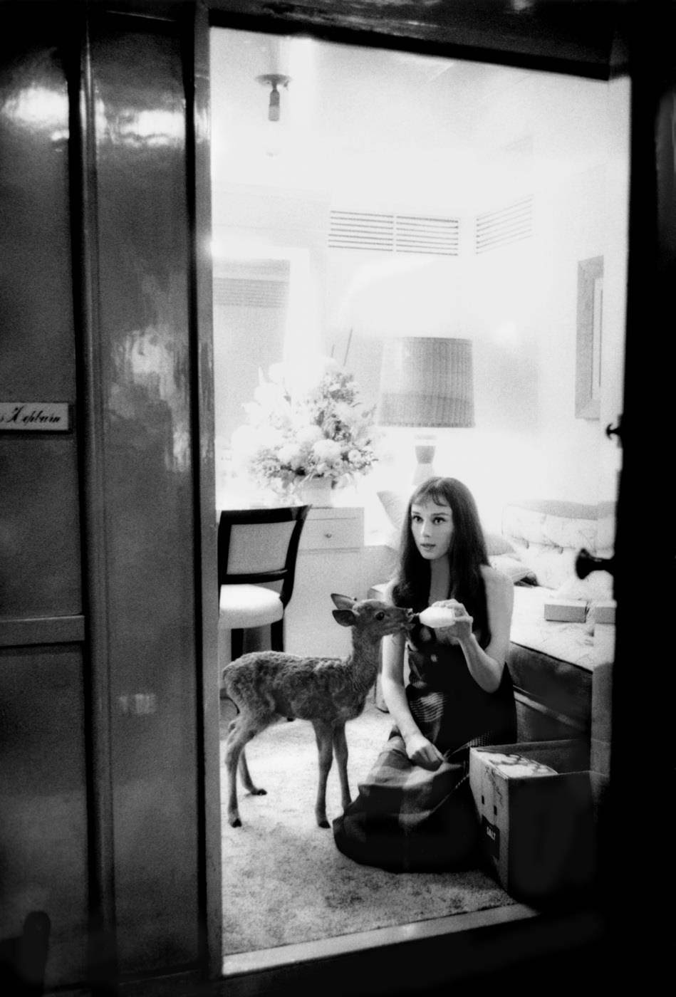 """Audrey Hepburn feeds her pet deer Ip its morning bottle during a break from filming on MGM's """"Green Mansions,"""" 1958"""