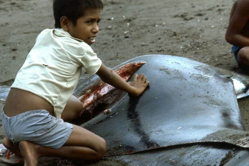 Flores boy with manta ray, 1970s