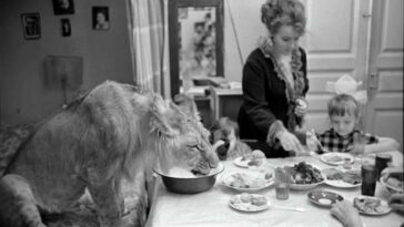 The Tragic Story of a Soviet Family Who Raised Lions as their Pets in the 1970s